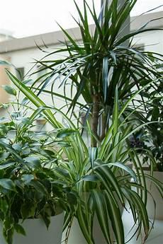 Wie Viel Licht Ben 246 Tigen Zimmerpflanzen Ndr De