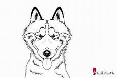 Ausmalbilder Hunde Husky Husky Malvorlage Ausdrucken Coloring And Malvorlagan