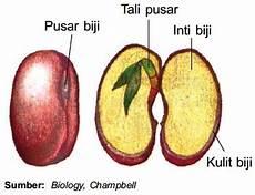 Struktur Fungsi Bagian Buah Dan Biji Pada Tumbuhan