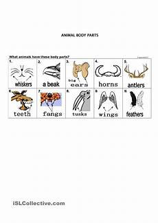 animal parts worksheets esl 14296 pin en kindergarten