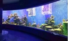 Aquaristik Shop Aquariumbau Planung Installation Service