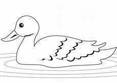 Malvorlage Ente Einfach Ausmalbild Ente Im Schilf Ausmalbilder Kostenlos Zum