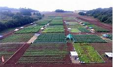 curso de agronomia realiza dia de co ideau get 250 lio vargas