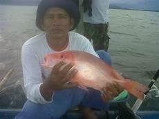 Pembenihan Budidaya Dan Pemasok Ikan Tawar Segar