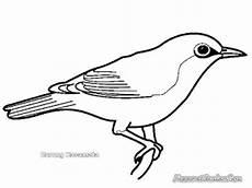 26 Best Harga Burung Kacer Hitam Putih Burung