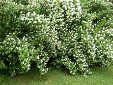 nachtduftende pflanzen f 252 r den garten arten pflegetipps