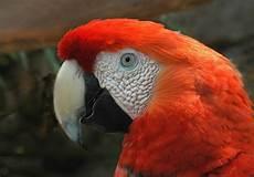 photo gratuite ara oiseau perroquet image