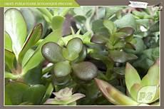 plante succulente entretien succulente plante entretien pivoine etc