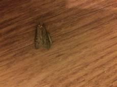 motten im schlafzimmer hilfe motten im schlafzimmer insekten sch 228 dlinge ekel
