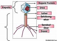 Materi Pelajaran Biologi Agustus 2015