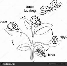 insekten malvorlagen xl