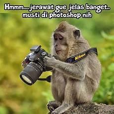 Gambar Monyet Lucu Gokil Bergerak Dan Kata Kata Lucu