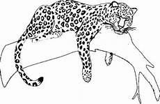 jaguar coloring pages animal drawings jaguar animal