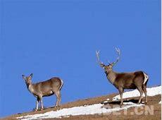 保护野生动植物