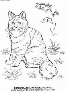 Ausmalbilder Siamkatze раскраска норвежская лесная кошка раскраски кошек