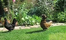 Hühner Im Garten - h 252 hner im garten honeyfarm nat 252 rlich leben und genie 223 en