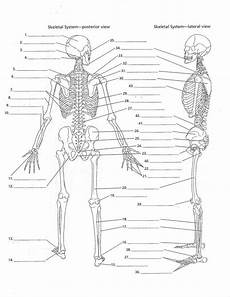 anatomy labeling worksheets search i heart