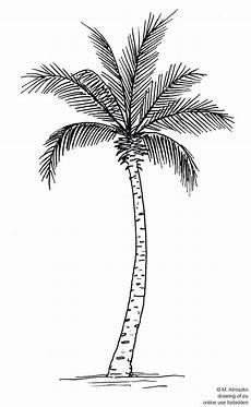 palma llanera para dibujar palma dibujo dibujos