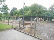 pferde pferde unterstand selber bauen pferdeunterstand