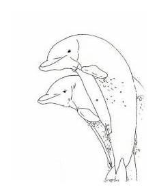 Malvorlage Delphine Kostenlos Malvorlagen Delphine Kostenlos Zum Ausdrucken