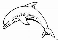laechelnder delphin springt ausmalbild malvorlage tiere