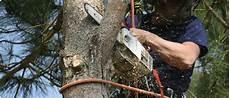 Materiel Elagage Arbre Le M 233 Tier D Arboriste Grimpeur 233 Lagueur Et Mat 233 Riel