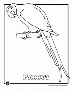rainforest animals coloring pages preschool 17131 endangered rainforest parro woo jr activities