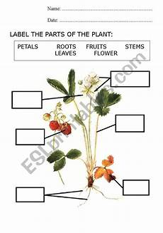 parts of a plant esl worksheet by nuriabad