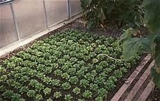 Gartentipps Welches Gem 252 Se Kann Im August Anbauen