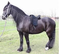 Malvorlage Pferd Mit Sattel Cale Echt Leder Dressur Sattel 18 Zoll Pferdesattel