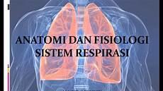 Anatomi Dan Fisiologi Sistem Pernapasan Koleksi Anatomi
