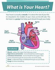 heart worksheets for 2nd grade your heart worksheet education com