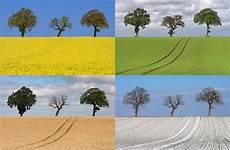 die 4 jahreszeiten foto bild jahreszeiten natur baum