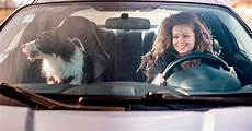 In Car - why driving with your in the car could cost you 163 5 000