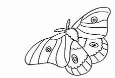 ausmalbilder insekten malvorlagen ausdrucken 2