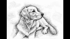 14 hunde ausmalbilder russel
