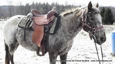 cheval a vendre pas cher ou a donner tout sur le cheval