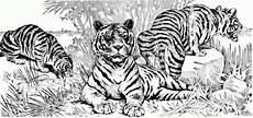 ausmalbilder tiger zum ausdrucken kinder ausmalbilder