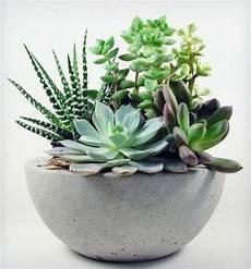 pflegeleichte zimmerpflanzen wenig licht zimmerpflanzen bilder gem 252 tliche deko ideen mit topfpflanzen