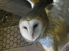 animal worksheets in 13905 ross park zoo binghamton all you need to before you go binghamton ny tripadvisor