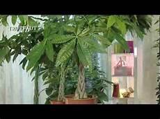 plante d int 233 rieur la choisir et l entretenir