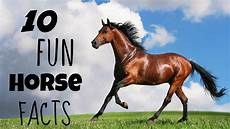 10 facts about horses