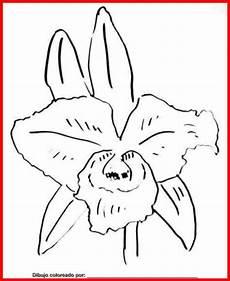 orquidea nacional para colorear dibujo de orquideas para colorear e imprimir