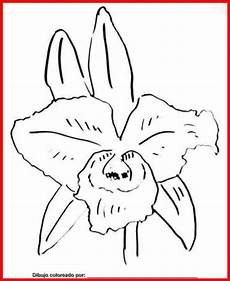 orquidea de venezuela para colorear dibujo de orquideas para colorear e imprimir