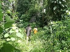 Menanti Pengesahan Hutan Adat Baringin Enrekang Mongabay