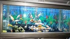 Keren Abis 23 Gambar Ikan Dalam Aquarium