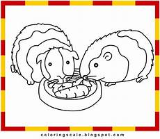 coloring pages printable for guinea pig coloring