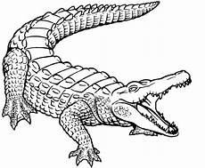 free printable crocodile coloring pages for