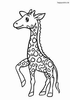 Malvorlagen Giraffen Gratis Giraffe Ausmalbild Kostenlos 187 Giraffen Malvorlagen