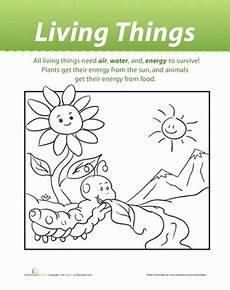 animals living things worksheets 14056 living things worksheet education